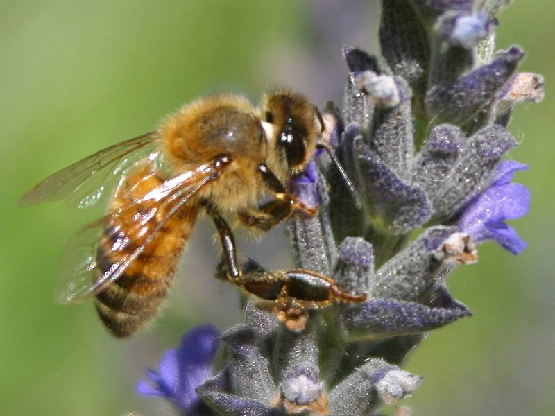 Bee picture